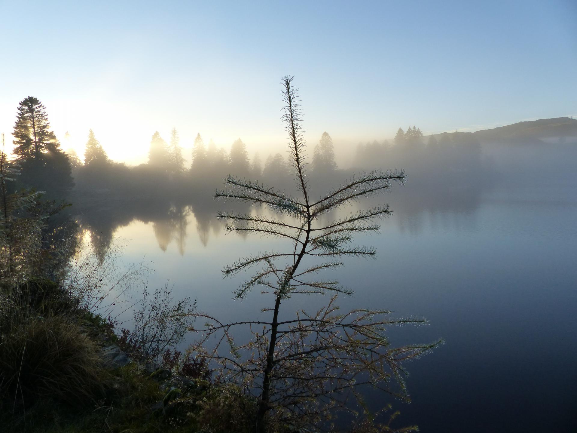 Perthshire Amber - Loch Ordie