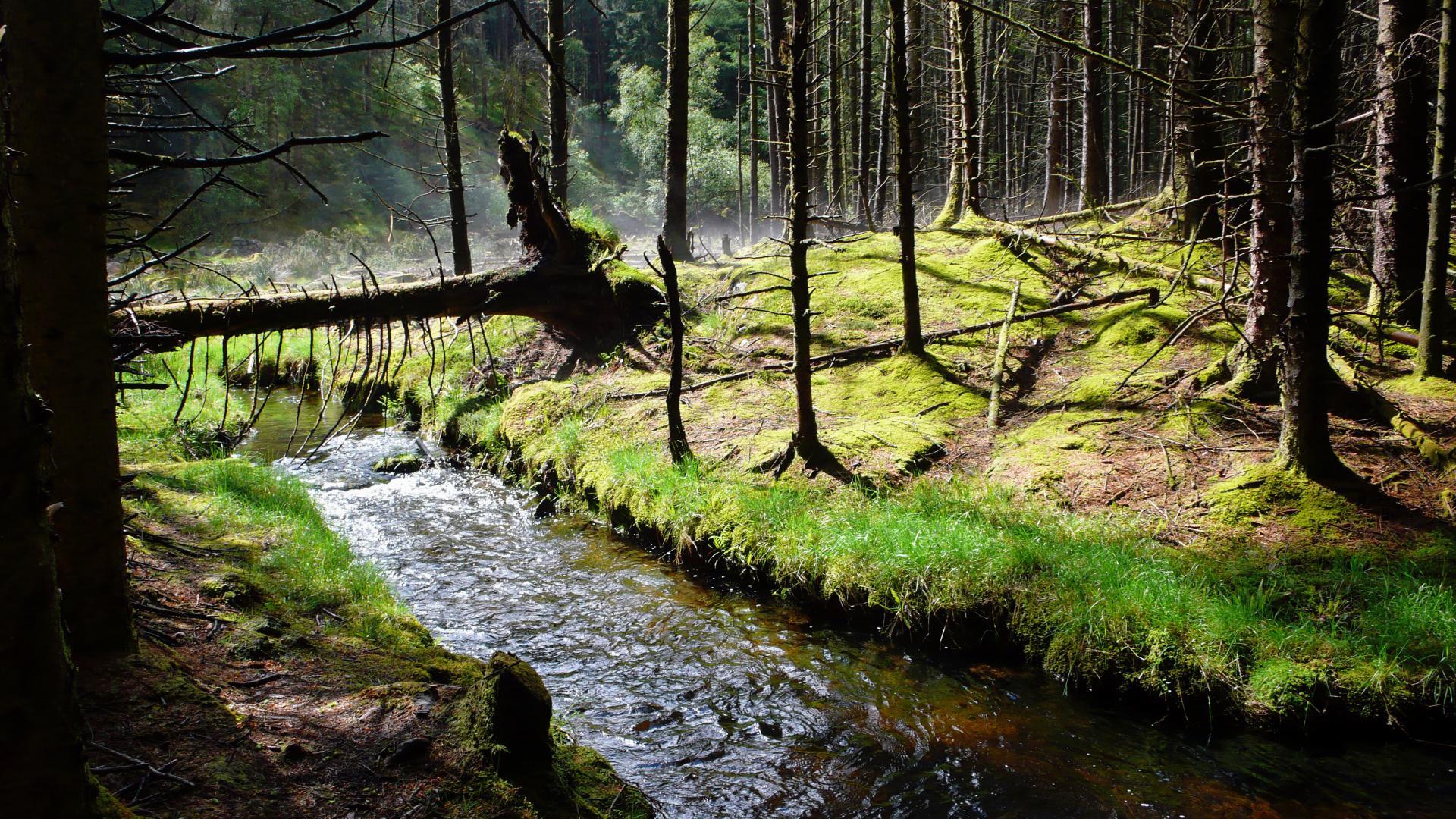 Galoway Wald