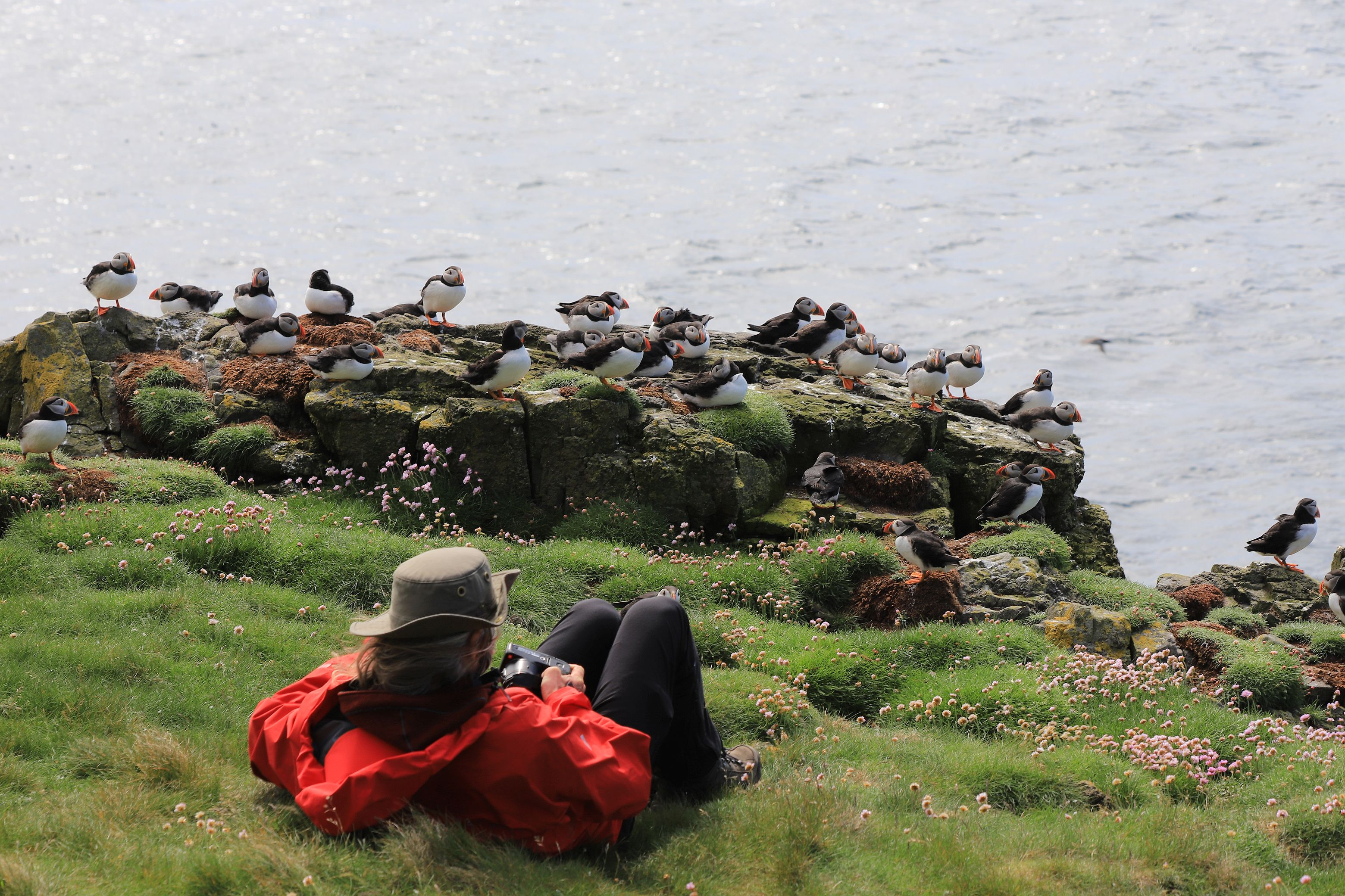 Puffin Therapy auf Lunga