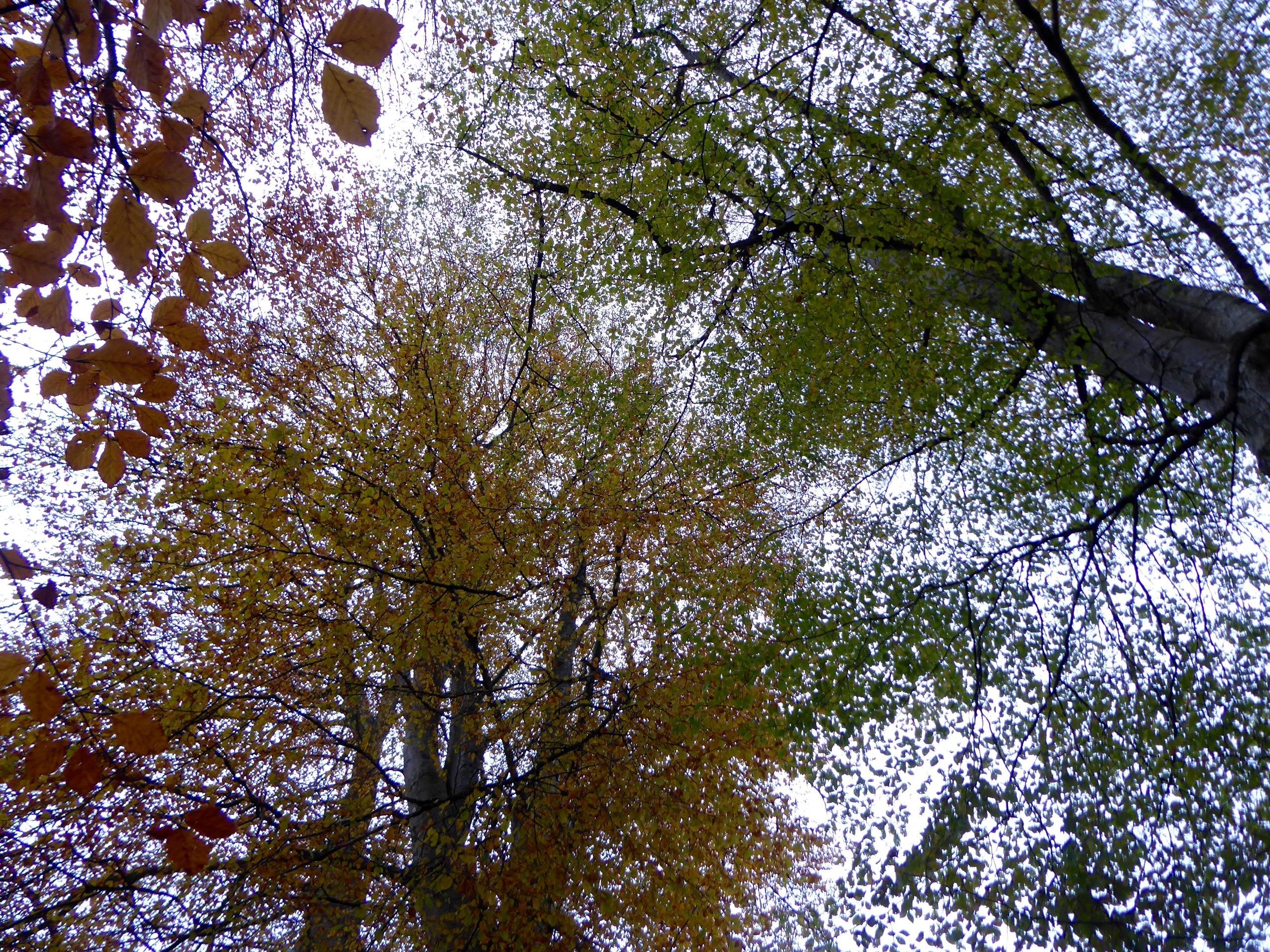 Big Tree Country