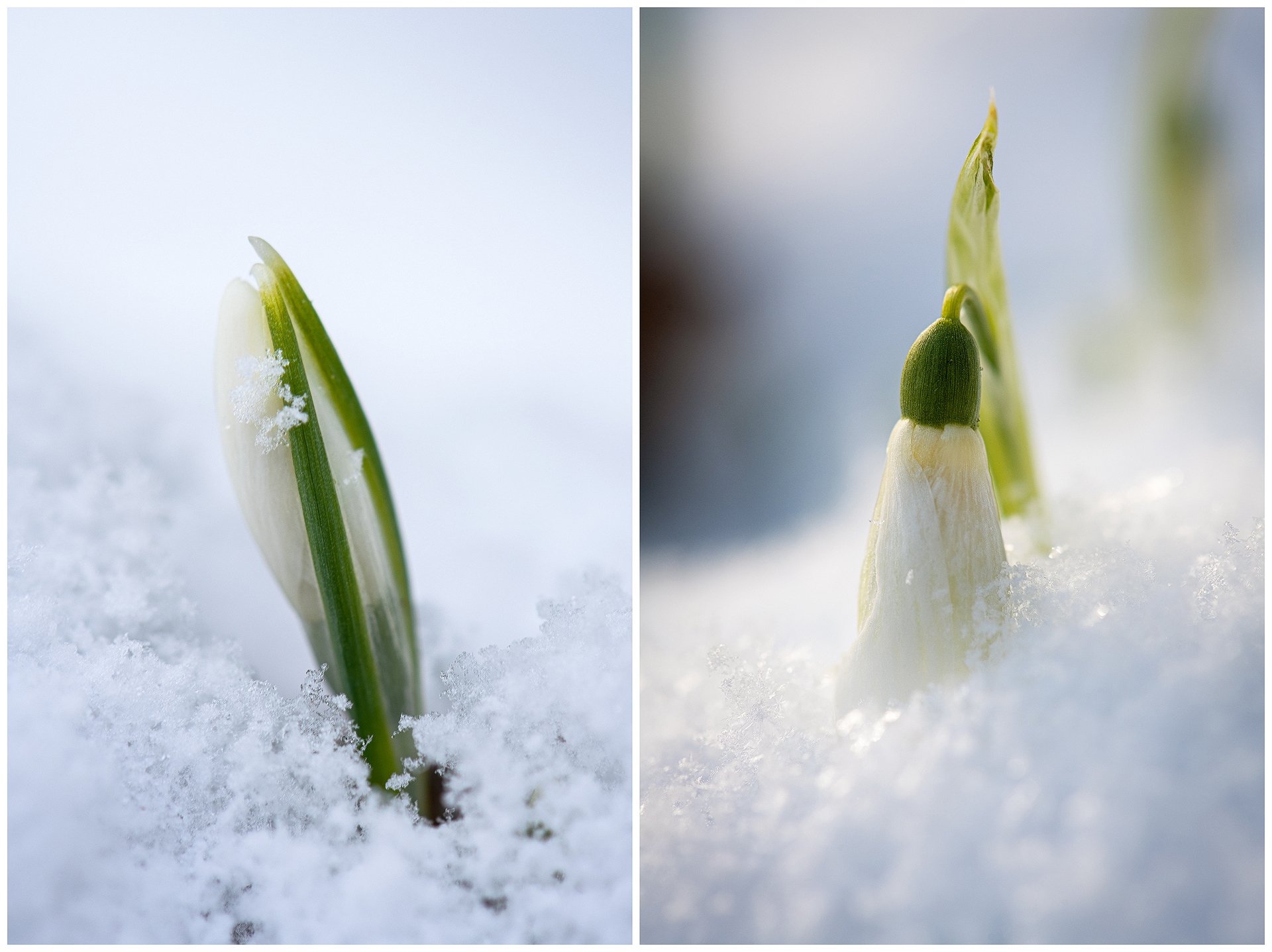 Ausharren im Schnee