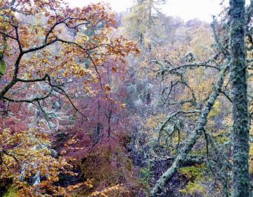 November: Perthshire Amber