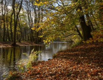 Herrliche Herbstfärbung in Perthshire