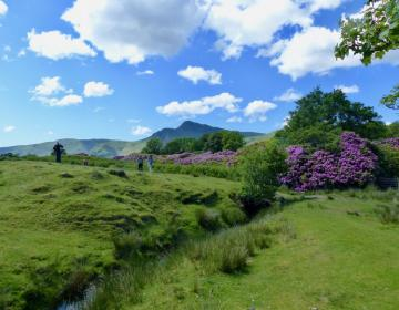 Rhododendron und sattes Grün