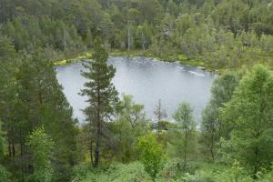 See im kaledonischen Wald