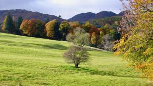 Perthshire Amber - Herbstfarben!