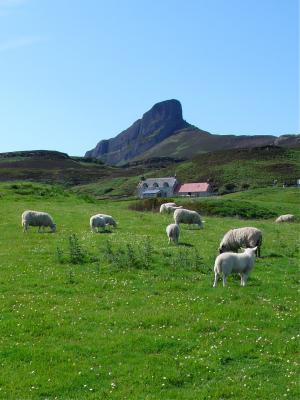 Auch Schafe finden es hier schön