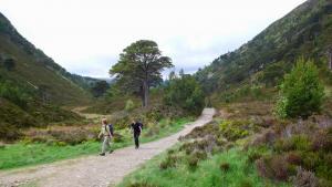 Wandern bei Ryvoan, Cairngorms NP