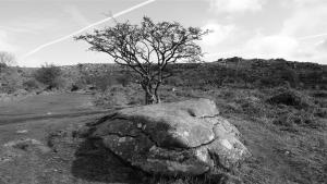 Dartmoor Fels und Weißdornbaum