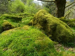 Moosbewachsene Felsen auf unserer Dartmoor Tors Wanderung
