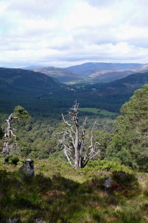 Ballochbuie Forest, Deeside