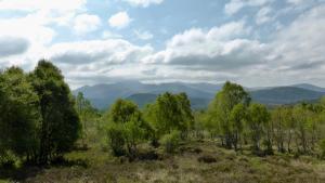 Lochnagar hinter Birken