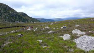 Wanderung Lochnagar Gebiet