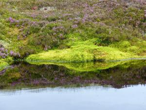 Monaltrie Moss