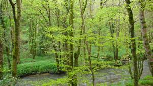Loddiswell Frühling