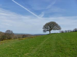 Einsamer Baum in Exmoor