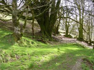 Licht und frisches Grün, Exmoor