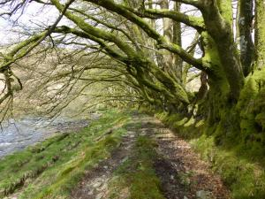 Simonsbath Bäume