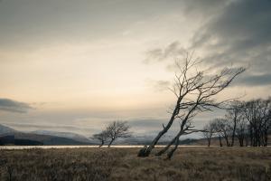 Birken an Loch Tulla, Rannoch Moor