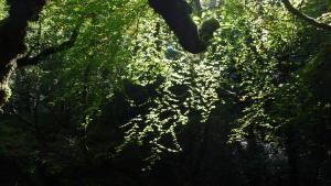 Irisches Licht, Glengarriff