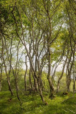 Hasenglöckchenwald auf Mull