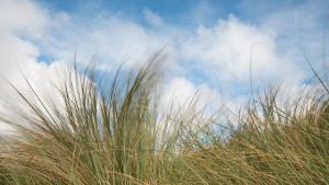 Dünengras im Wind, NW Highlands Fotoreise