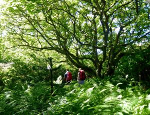 Orkney Wandern