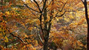 Perthshire Herbst