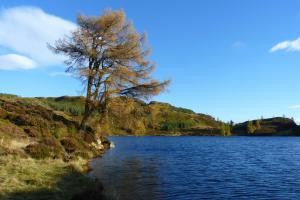 Baum und See