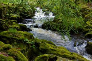 Fluß und Wald