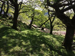 Wales unter Eichen