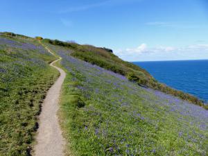 Cornwall Wanderreise - Bluebells