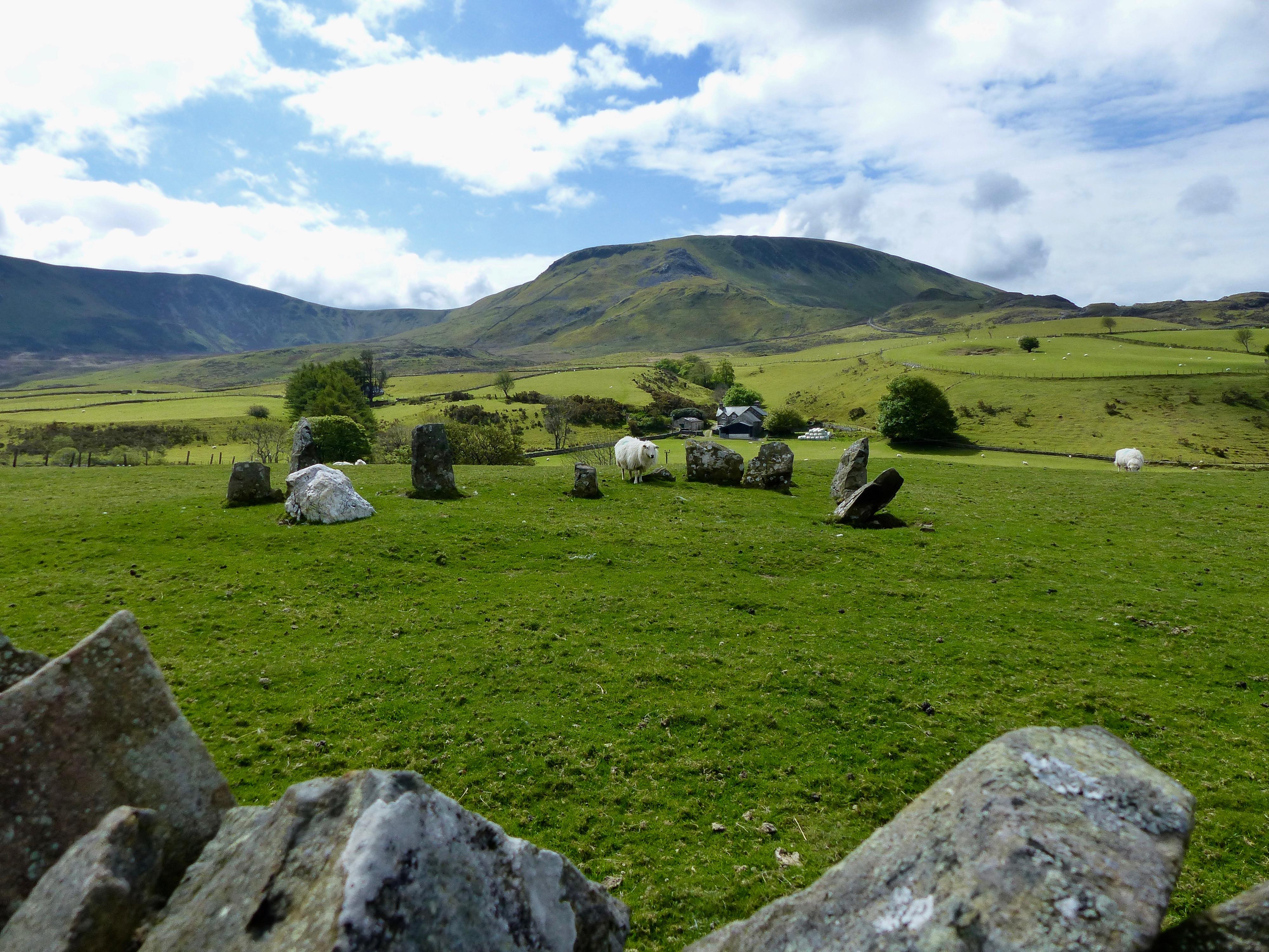 Schafe überall